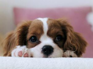 6 Tips For House Training A Puppy
