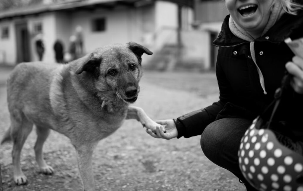 Dog Shake Paw