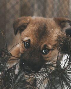 New Puppy2