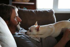 Man And Dog On Sofa