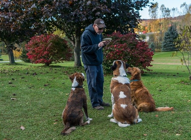 Trainer And Dogs
